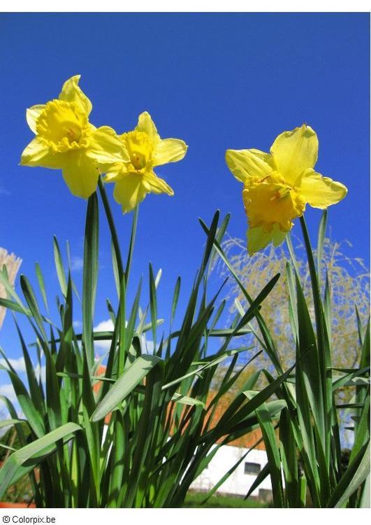 It#39;s (sniff) Springtime