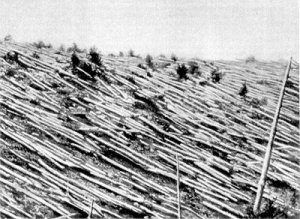 Trees near the Tunguska Event epicenter 20 years after the blast occurred.